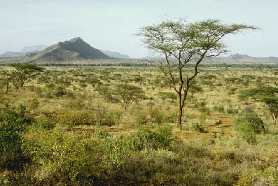 Tropical Savanna Vegetation