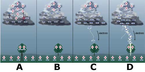 an analysis of the negatively charged electrons Electron micrographs of thin sections of young cells showed a uniform and dense  depostion of positive  pletely removes the negative charge from the cells (5).